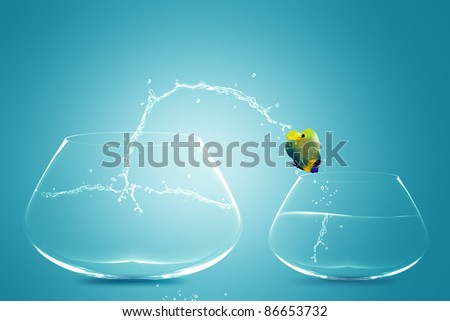 Angelfish jumping to small bowl, Good Concept for bad choice, bad Opportunity, Failure and Stupidity concept.