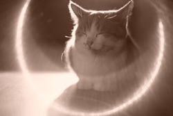 angelic cute cat resting in the rays of the sun sickle