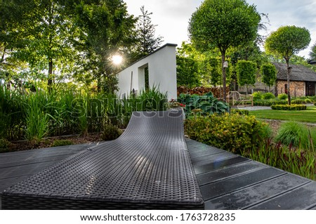 Angielski  Modern grass garden. A garden among grasses Zdjęcia stock ©