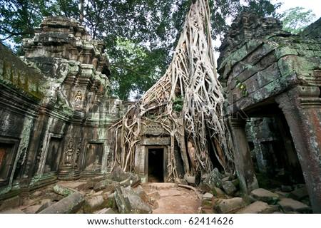 Angkor Wat - Ta Prohm temple, Cambodia