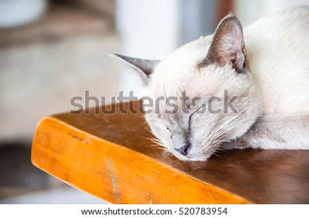Angle cats #520783954