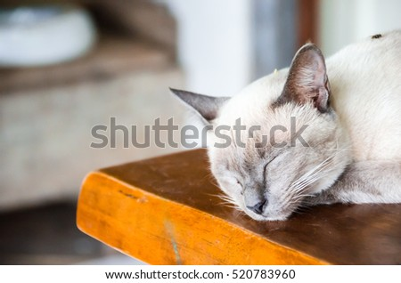 Angle cats #520783960
