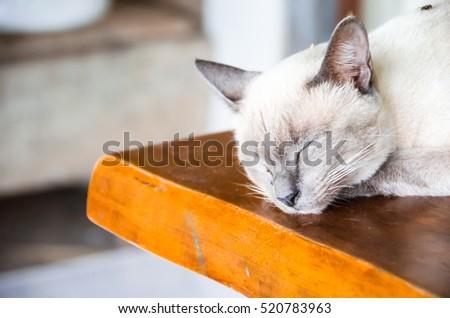 Angle cats #520783963