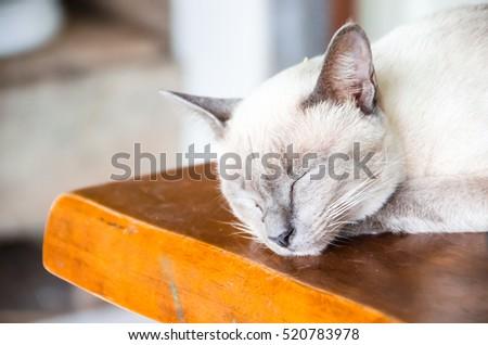 Angle cats #520783978