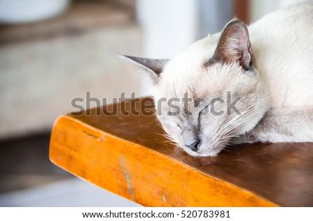 Angle cats #520783981