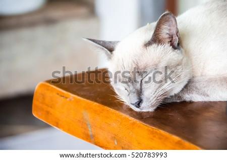 Angle cats #520783993