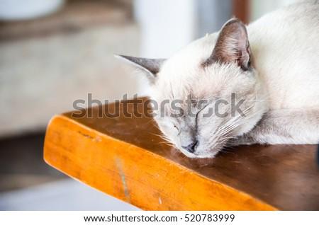 Angle cats #520783999