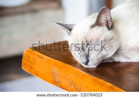 Angle cats #520784023