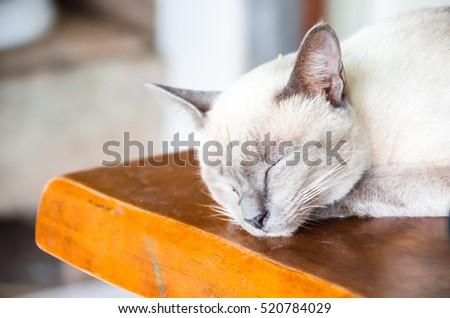 Angle cats #520784029