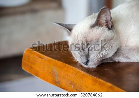 Angle cats #520784062