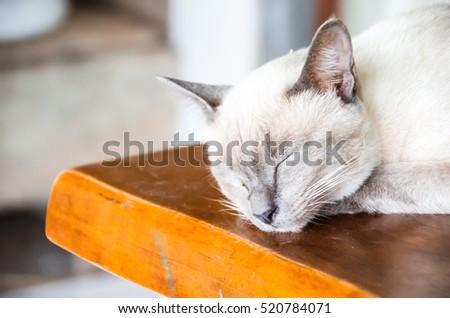 Angle cats #520784071