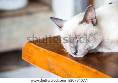 Angle cats #520784077
