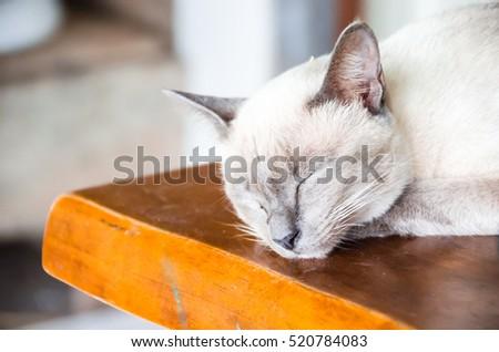Angle cats #520784083