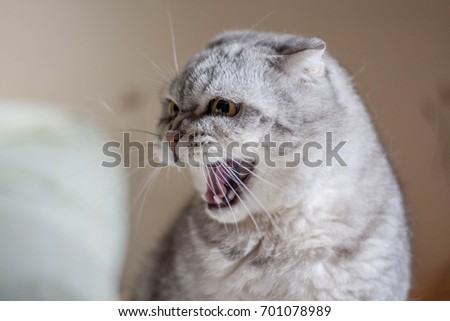 Angry cat #701078989
