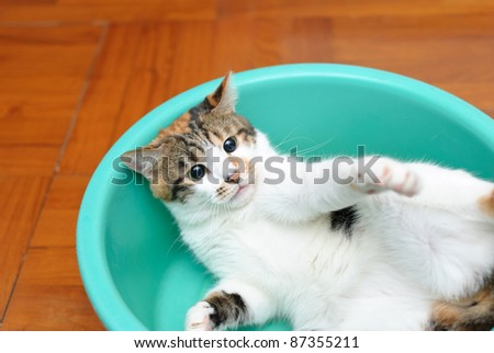 Angry cat in tray - stock photo