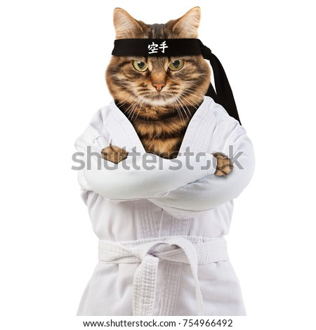 Angry cat is wearing a kimono. Cat fighter is engaged in karate-do. Hieroglyph translates - karate.