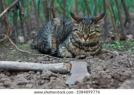 Free Photos Fat Angry Grey Tiger Cat Avopixcom