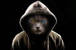 Angry Cat wearing a Hoodie