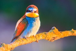 angry colored bird in the summer evening on the branch