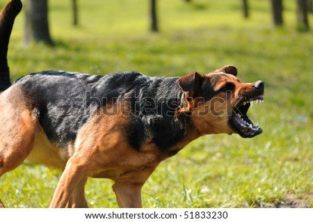 angry dog with bared teeth