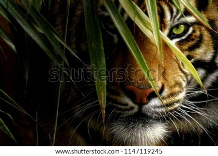 angry hidden face of tiger
