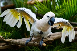 Angry parrot - Scarlat Macaw