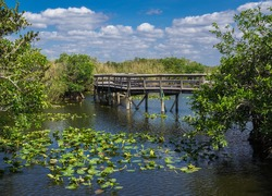 Anhinga Trail Boardwalk through the Everglades National Park, Florida