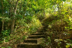 Anilao, Philippines. Old staircase covered with moss and green trees on the sides. Hiking trail. Nature. Outdoors.