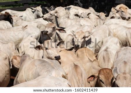 Animais ao ar livre na fazenda Stock fotó ©