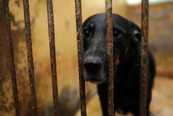 Animal abuse. Sad stray dog sitting behind bars in the aviary