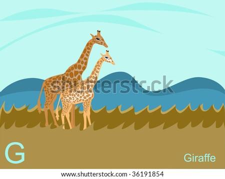 Animal alphabet flash card, G for giraffe.  jpeg format