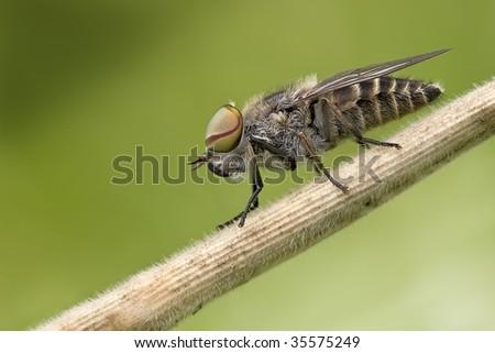 animal animals natur nature insect insects wild wildlife macro makro micro european europa europe
