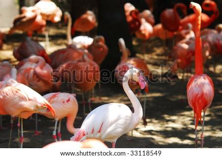animal at the zoo