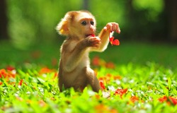 Animal : Baby Monkey sitting on beautiful green garden and playing flower. Little monkey playful in park view on sunny day. A baby macaque monkey in natural habitat, playing flower forest and jungle