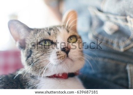 animal background cat cute best friend on hug women girl and process soft focus tone #639687181