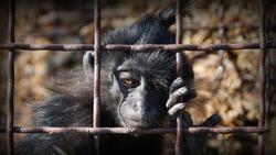 Animal behind bars. Animal cruelty