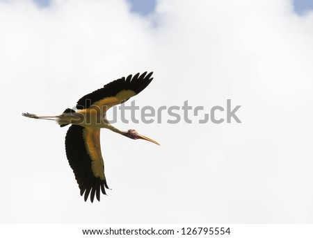 Animal: Bird flying on the sky