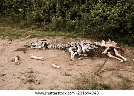 Animal bones by the road stock photo