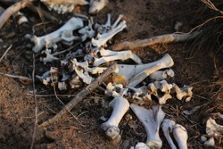 animal bones lying on the forest ground remains