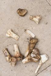 Animal bones on the asphalt. Close-up. The bones of a large animal. The texture of the large bones of the animal. Concrete surface texture