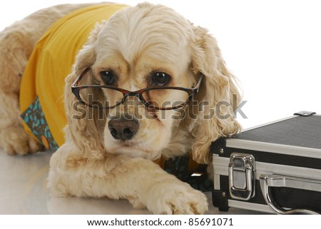 animal business - cocker spaniel dressed up in business attire with breakcase
