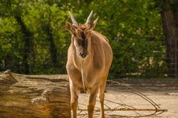 Animal captured behind bars in zoo