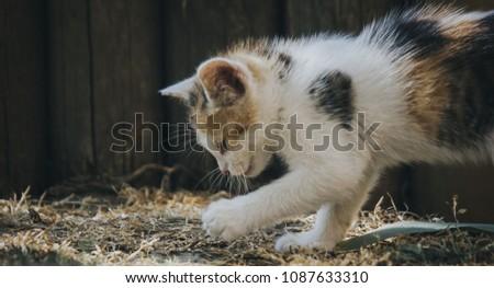 Animal, Cat, Kitty #1087633310