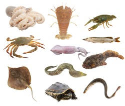 Animal collection, animals isolated on white background