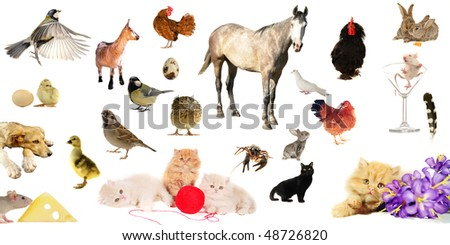 animal farms are isolated on a white background