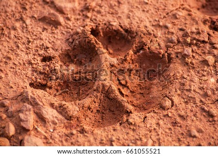 Animal footprint                                #661055521