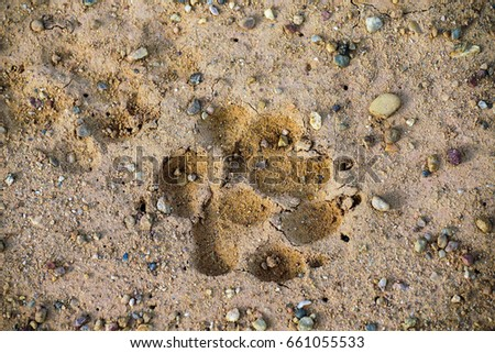 Animal footprint                                #661055533
