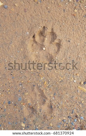 Animal footprint #681370924