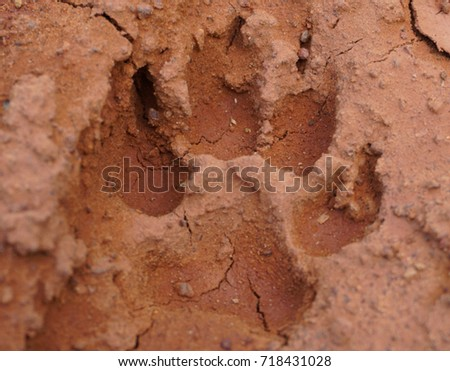 Animal footprint #718431028