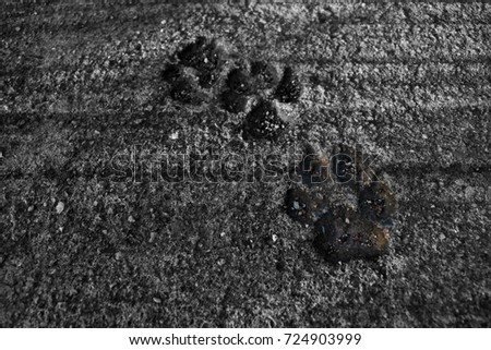 Animal footprint #724903999